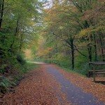 A_Road_In_Autumn