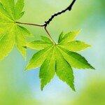 Spring_Sheet