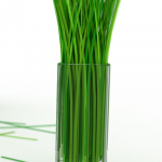grass-in-glass
